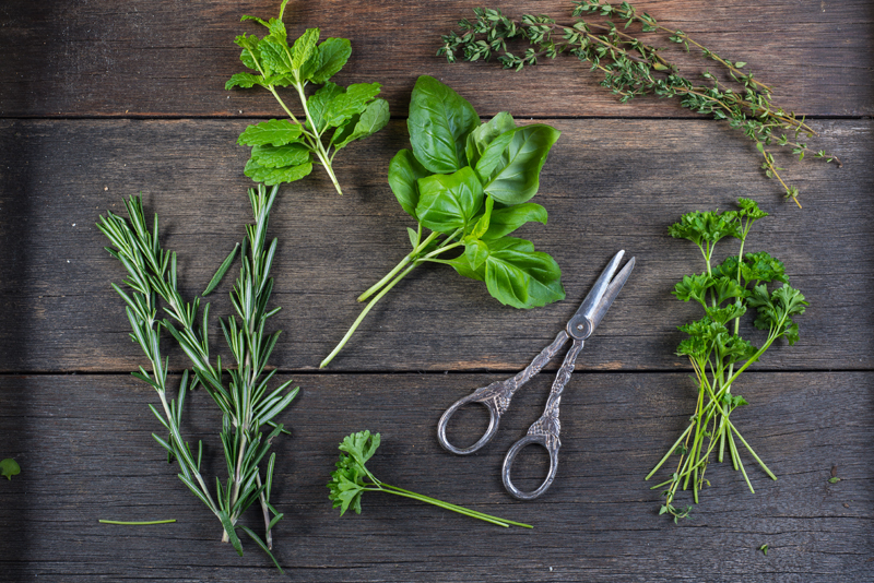 Fresh herbs preparation, Family For Health