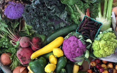 Mood Boosting Healthy Summer Food Memories